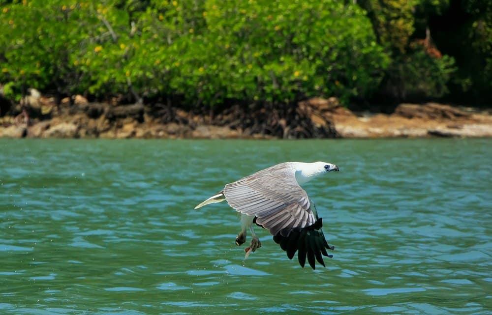 Eagles - the symbol of Langkawi @shutterstock