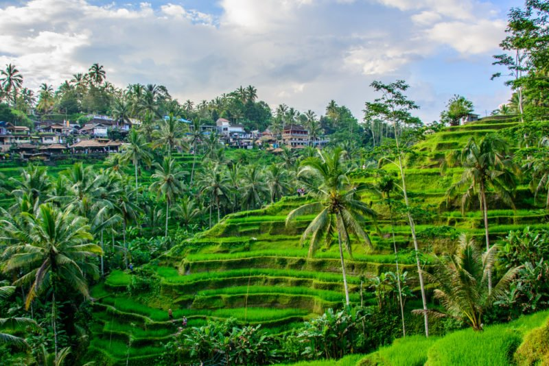 Tegallalang rice Terraces, Ubud, Bali, Indonesia