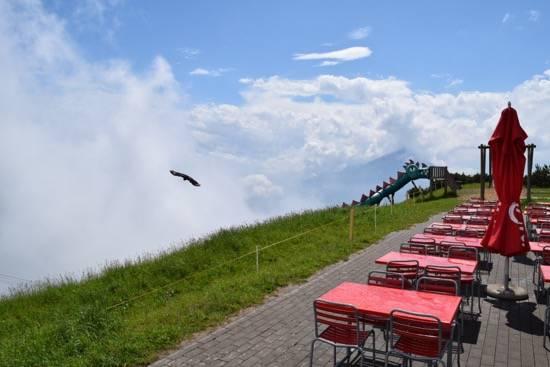 A Day at Niederhorn Including Lunch at Berghaus Niederhorn
