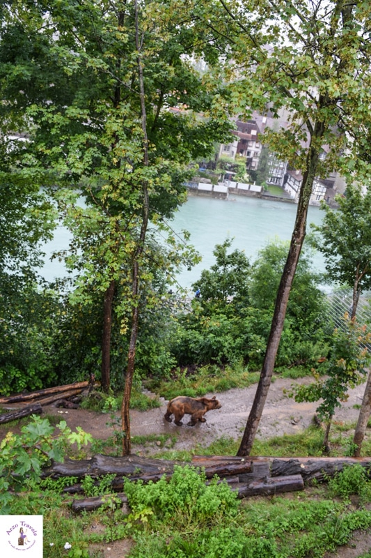 Bern sightseeing - Bern Switzerland places to visit - the Bear Park