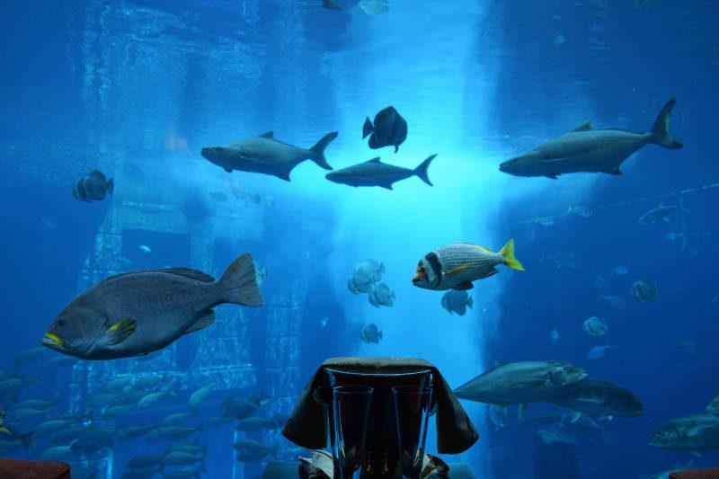 Underwater Suite - Atlantis - The Palm Dubai