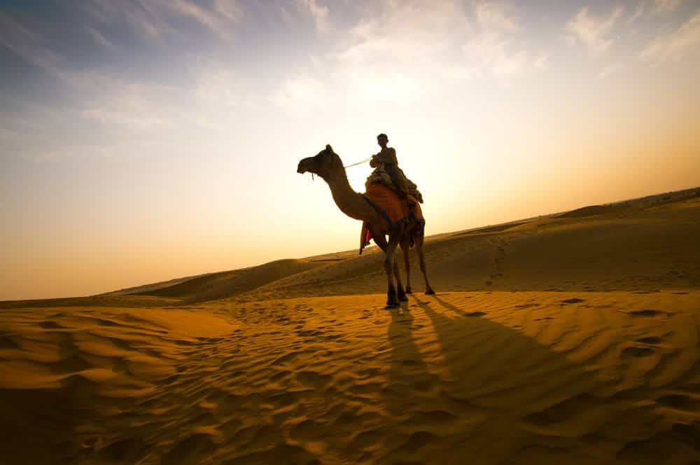 Silhouette of Camel in the Thar Desert during sunset. Thar Desert located at Jaisalmer, Rajasthan, India.