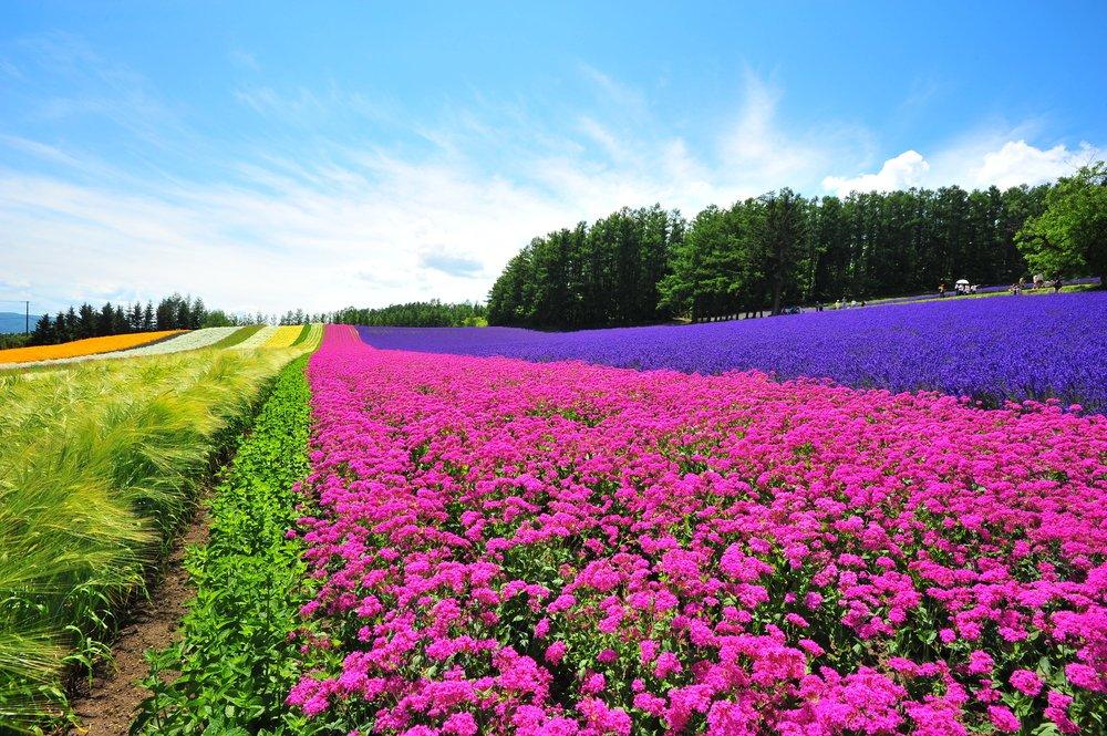 Flower Farms of Hokkaido Japan