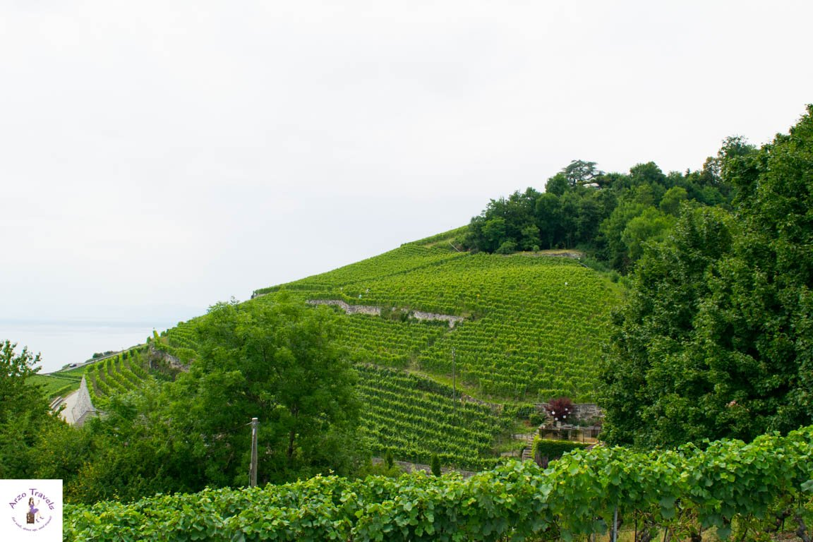 Vineyards in the Chexbres region - best places to visit in Montreux