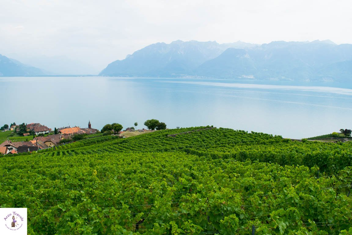 Vineyards of Montreux