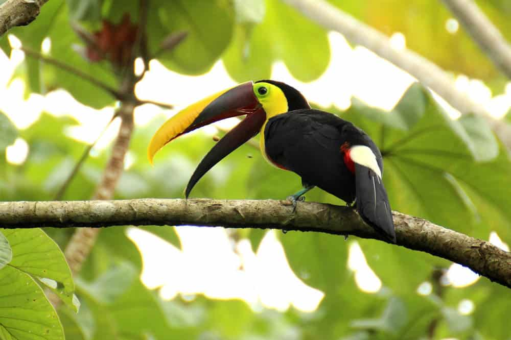 toucan best things to do in Costa Rica
