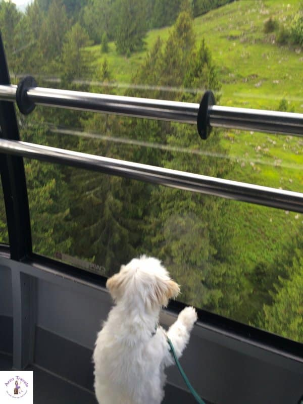 Puppygak is getting up Ebenalp Mountain via cable car