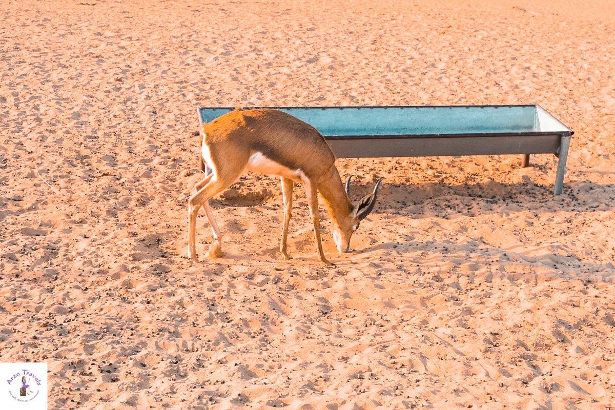 Animal Spotting in the Desert