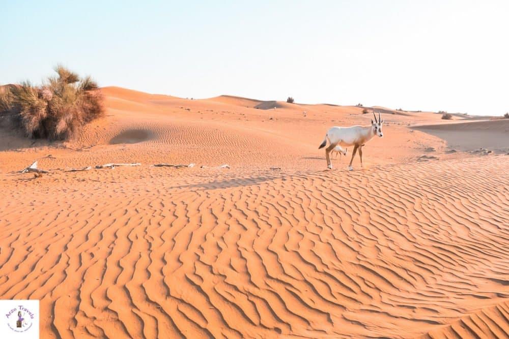Dubai Highlights Dubai erleben mit einer Wüstensafari - Ausflüge Dubai