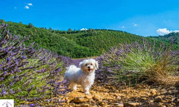 Best Things to Do in Provence France