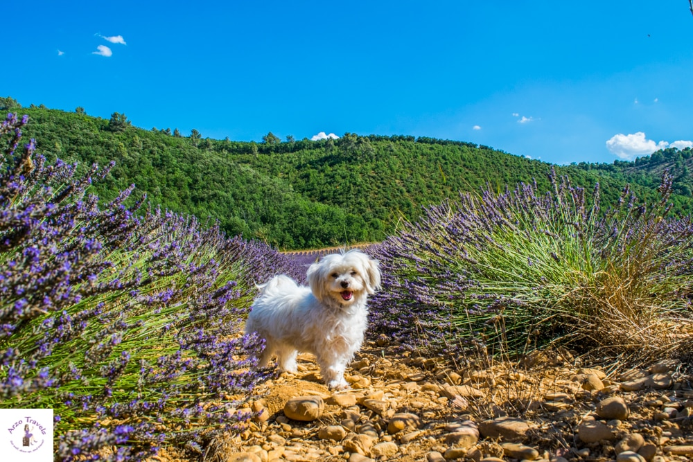 MOST EPIC AND BEST PLACES TO VISIT IN PROVENCE, FRANCE