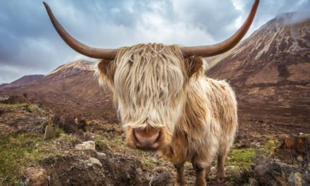 Where to Go in Scotland – Best Places to Visit in Scotland