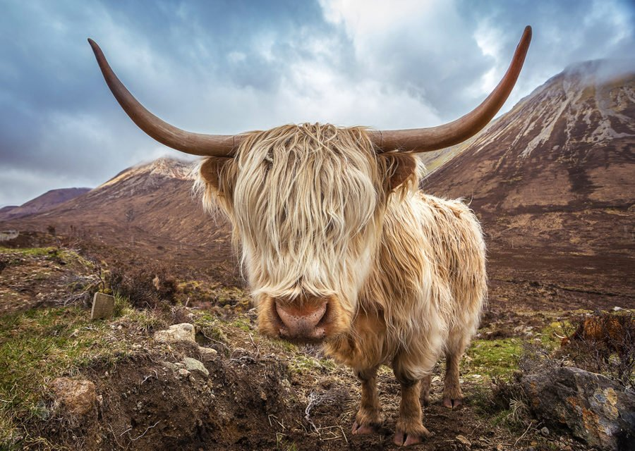Best Places to Go in Scotland