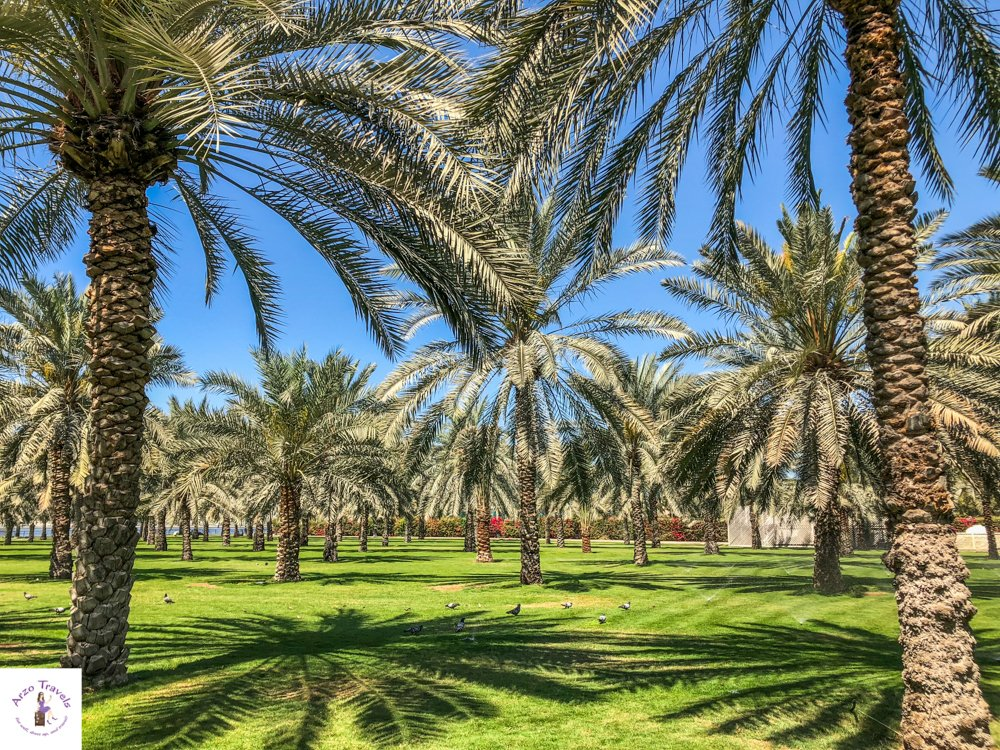Sharjah Places to visit - Palm Oasis