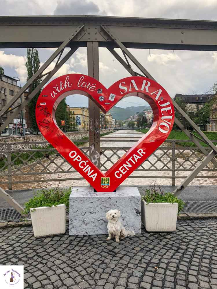 Sarajevo with a dog