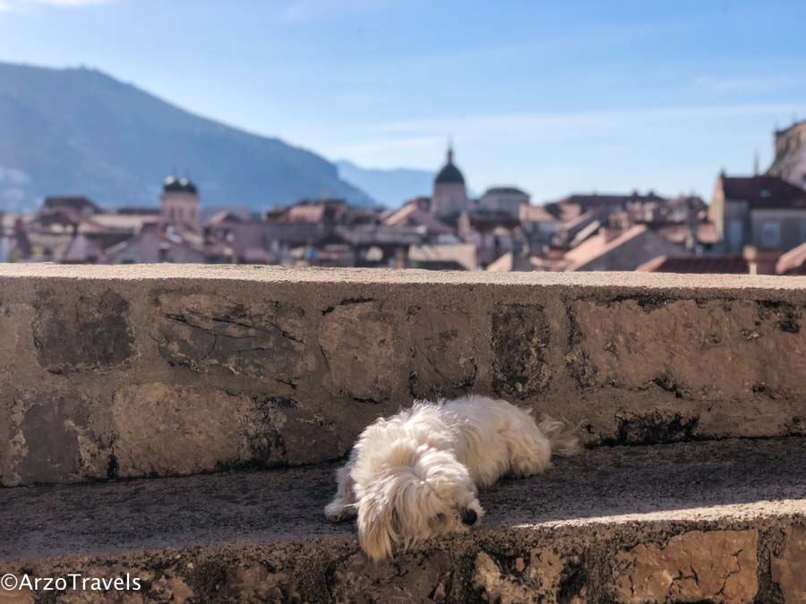 Traveling in Croatia with a dog