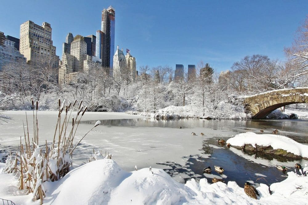 Things to do in New York in winter- visit a park