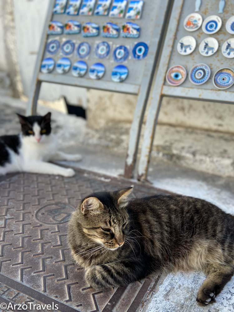 Cats of Pyrgos in Santorini, Greece Arzo Travels